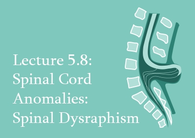 5.8 Spinal Cord Anomalies: Spinal Dysraphism